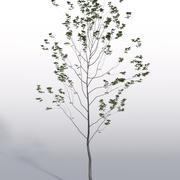Plante Extérieure 3 3d model