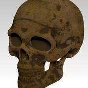 czaszka ludzka prawdziwa 3d model