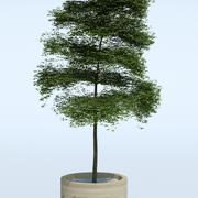 Freilandpflanze 7 3d model