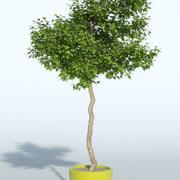 옥외 식물 10 3d model