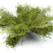 Rosnący krzew 3d model