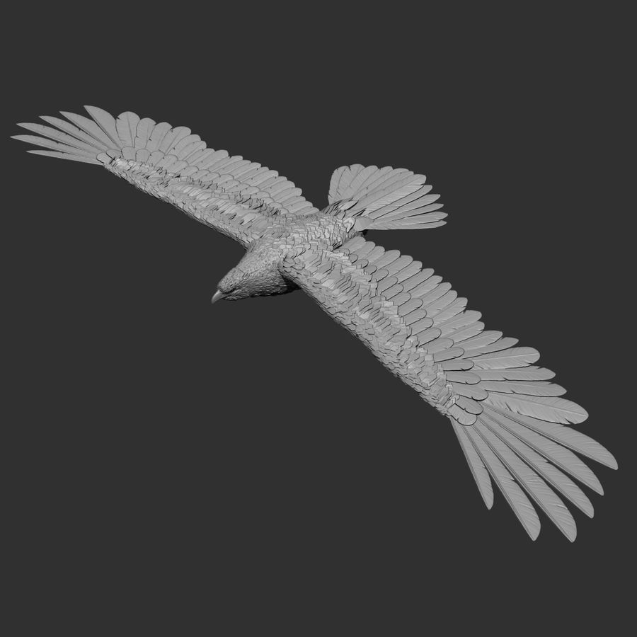 eagle  model royalty-free 3d model - Preview no. 2
