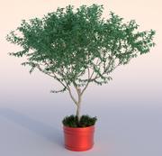 Outdoor Plant 1 3d model