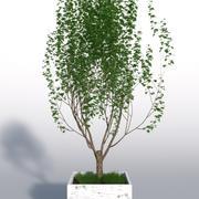 옥외 식물 2 3d model