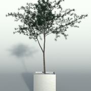 Freilandpflanze 4 3d model