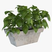 Roślina domowa 3d model