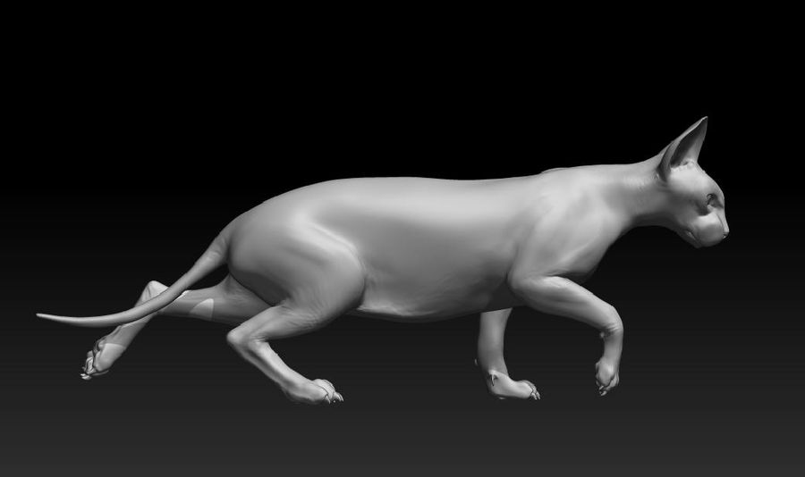 sphynx katze royalty-free 3d model - Preview no. 1
