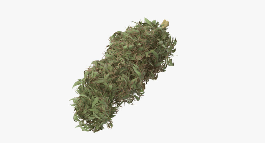 Marijuana Bud 01 03 royalty-free 3d model - Preview no. 2
