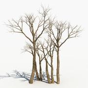 마른 나무 16 3d model