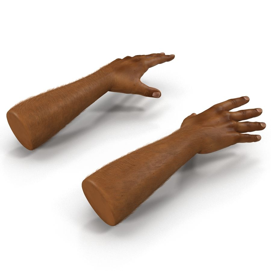 アフリカ人の手3の毛皮3Dモデル royalty-free 3d model - Preview no. 5