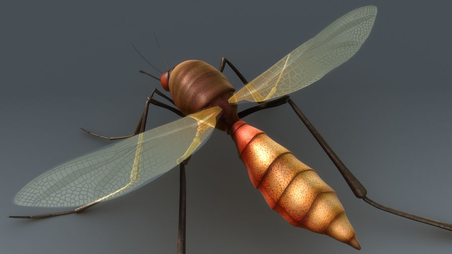 Mosquito royalty-free 3d model - Preview no. 3