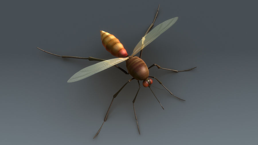 Mosquito royalty-free 3d model - Preview no. 2