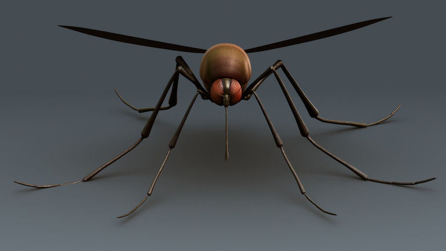 Mosquito royalty-free 3d model - Preview no. 4