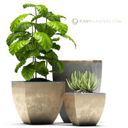 rośliny 38 3d model