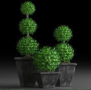 plantes 15 3d model
