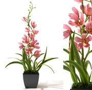planta de flor de orquídea modelo 3d