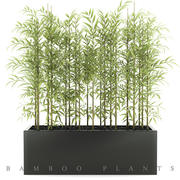 Bamboo plant 3 3d model