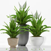 plant Lilly plant 3d model