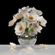 flower white poppies 3d model