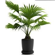 식물 팬 손바닥 3d model