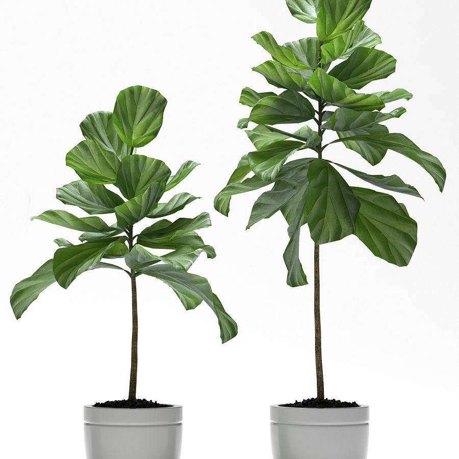 PLANTES PLANTES royalty-free 3d model - Preview no. 3