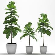 PLANTES PLANTES 3d model