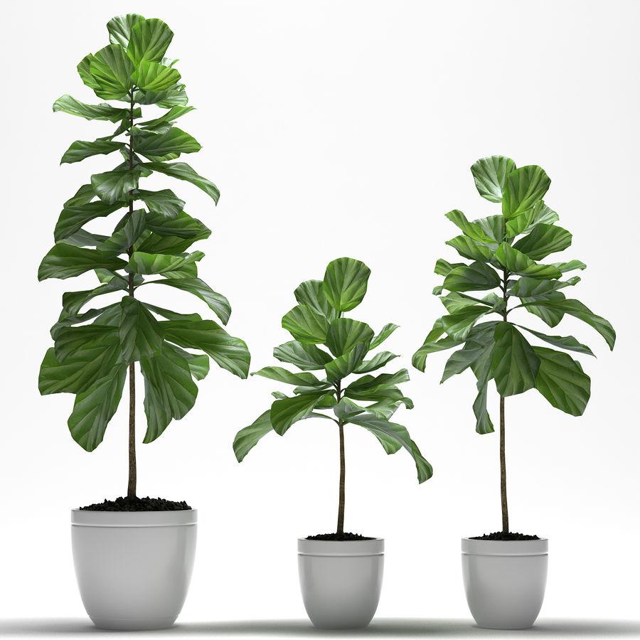 PLANTES PLANTES royalty-free 3d model - Preview no. 1