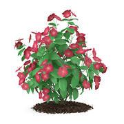 ハイビスカスの花(Hibiscus rosa-sinensis) 3d model
