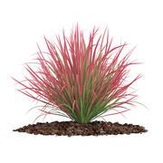 Ornamental Grass 3d model