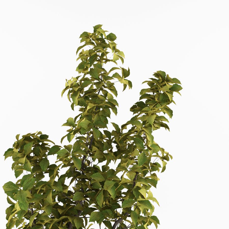 Doniczka na rośliny doniczkowe royalty-free 3d model - Preview no. 2