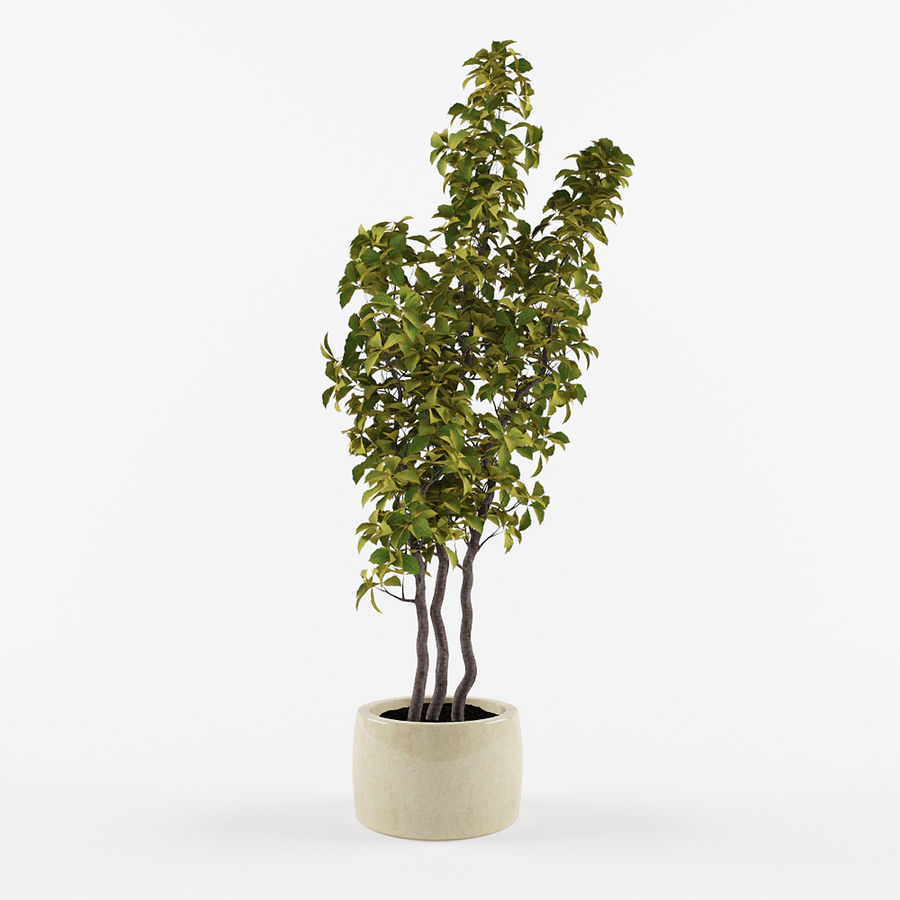 Doniczka na rośliny doniczkowe royalty-free 3d model - Preview no. 1
