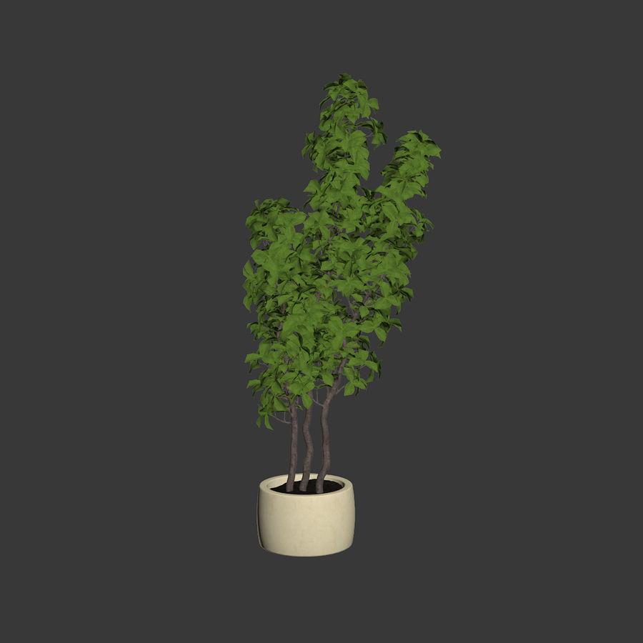 Doniczka na rośliny doniczkowe royalty-free 3d model - Preview no. 6