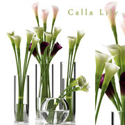 BLOEM CALLA LILLY 2 3d model
