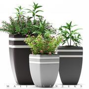 växter blommande växter 3d model