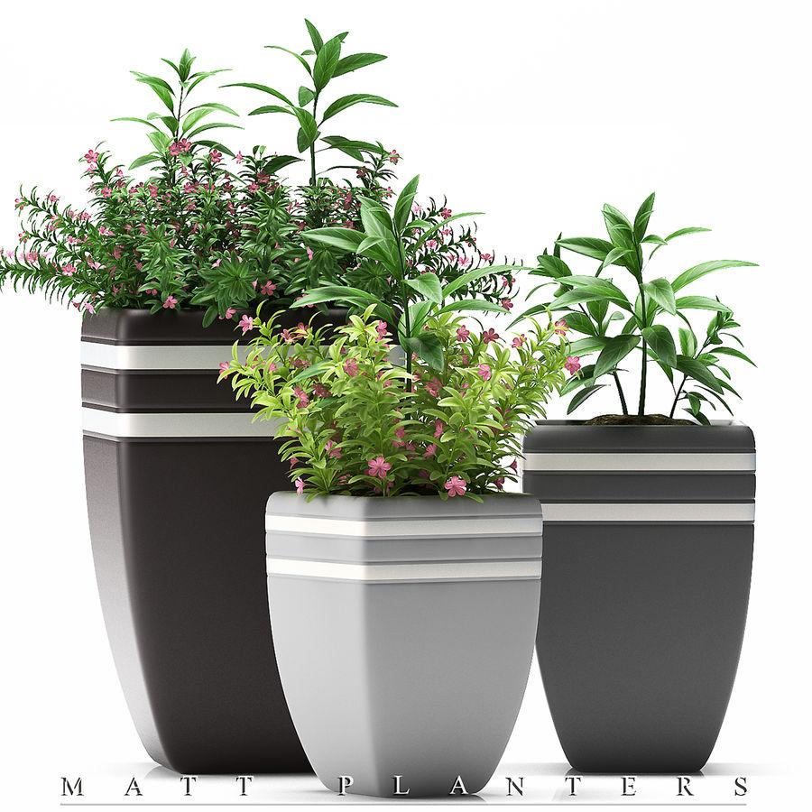 rośliny rośliny kwitnące royalty-free 3d model - Preview no. 1