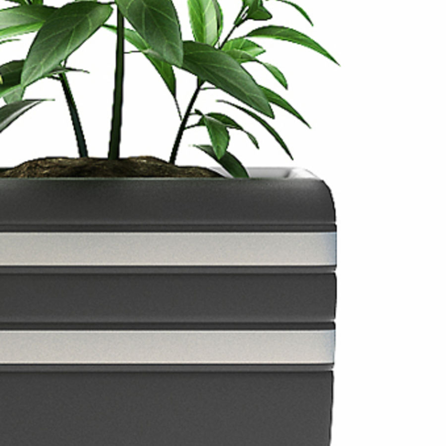 rośliny rośliny kwitnące royalty-free 3d model - Preview no. 2