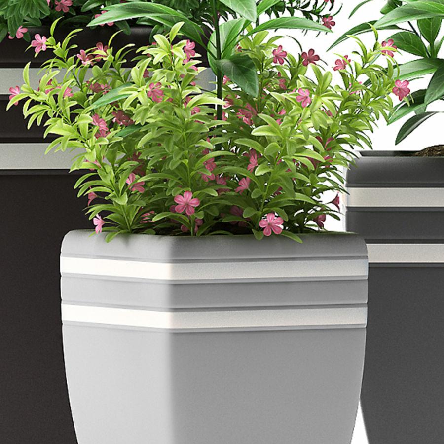 rośliny rośliny kwitnące royalty-free 3d model - Preview no. 4