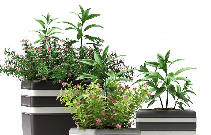 rośliny rośliny kwitnące royalty-free 3d model - Preview no. 5