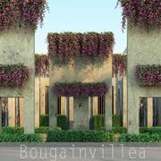 Bougainvillea 3d model