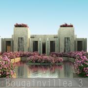 Bougainvillea 3 3d model
