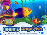 Marine Angelfish 3d model