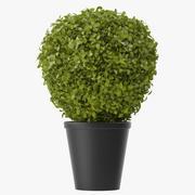 Shrubs In Pots 3d model
