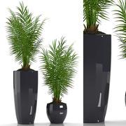 salon palm 3d model