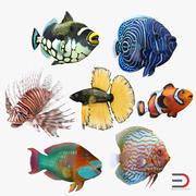 Coral Fishs Collection 3d model