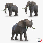 Elephants Collection 3d model