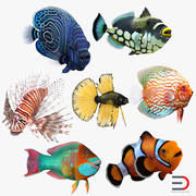 Coral Fishes Rigged Collection 3d model