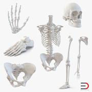 Female Skeleton Collection 3d model
