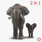 Elephants Rigged Collection 3d model