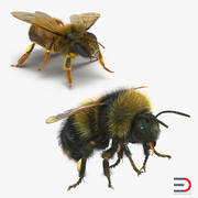 Bee and Bumblebee 3D Models Collection 3d model