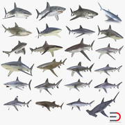 サメ3Dモデルコレクション9 3d model